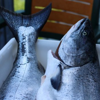 Preserving Salmon