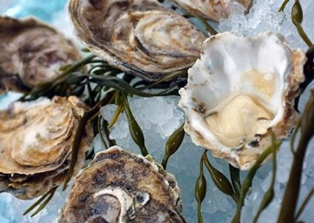Pearls of Wisdom: Oysters Are Smart Food.