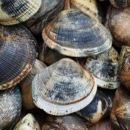 Lust for Mollusks
