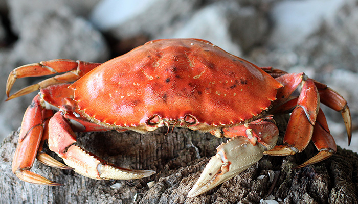 Is it Fair to Call Them Crabs?